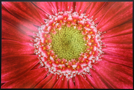 5DS R Photo of George Lepp's Flower Print - EF100mm f/2.8L Macro IS II f/8 at 1/60 sec ISO 100 - 43 images focus stacked!