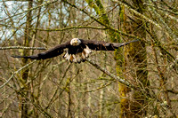 Eagles Nooksack-164-Edit